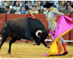 National Sport Bullfighting